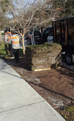 Exclusive Landscaping Install